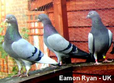 Eamon Ryan's birds